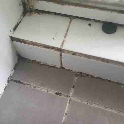 Mould in Shower